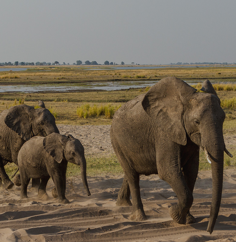 Botswana and Victoria Falls Family Safari