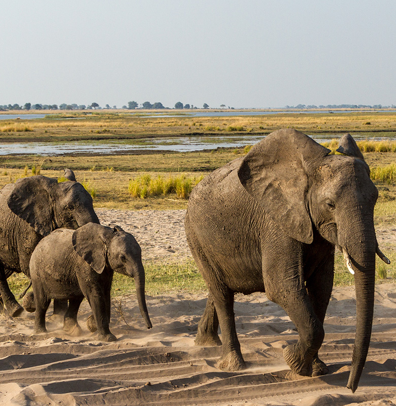 Botswana-and-Vic-falls-family-safari
