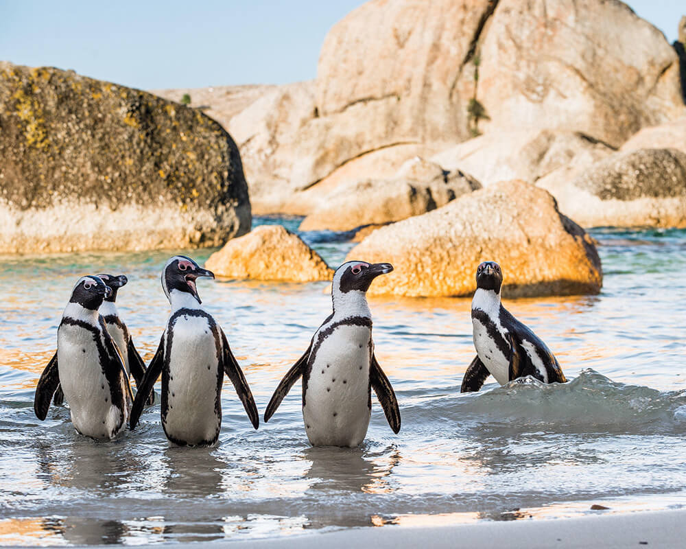 south-africa-conservation-safari-boulders-beach