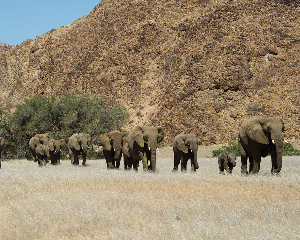 doro-nawas-elephants