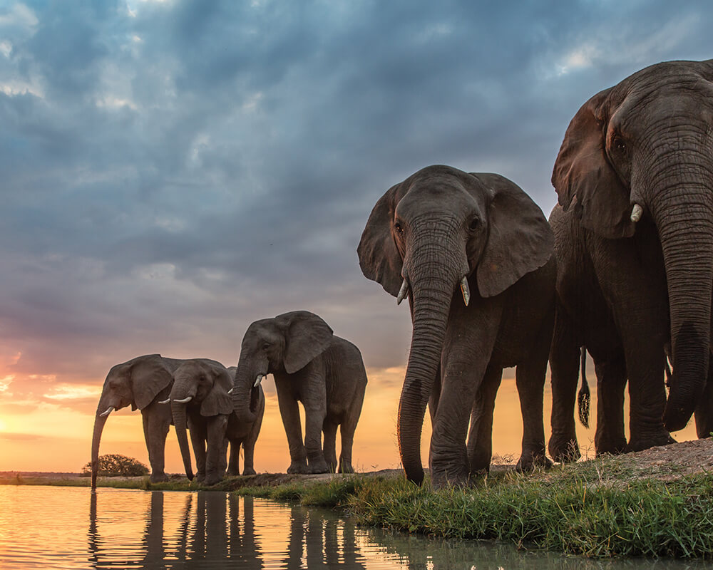 camp-jabulani-elephant-herd