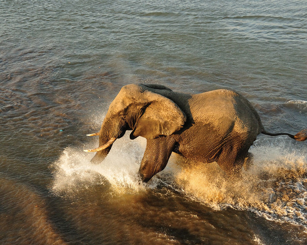 chobe-safari-chobe-river