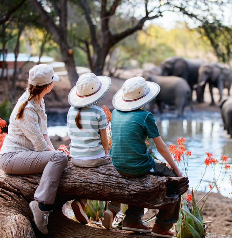 zimbabwe family safari