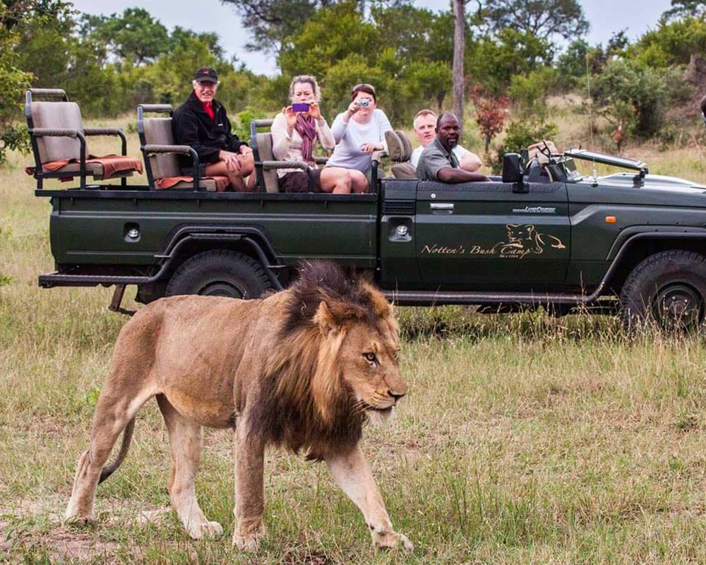 nottens-bush-camp-game-drive