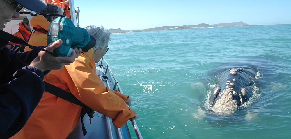 Whale watching from the Dreamcatcher Luxury Boat,