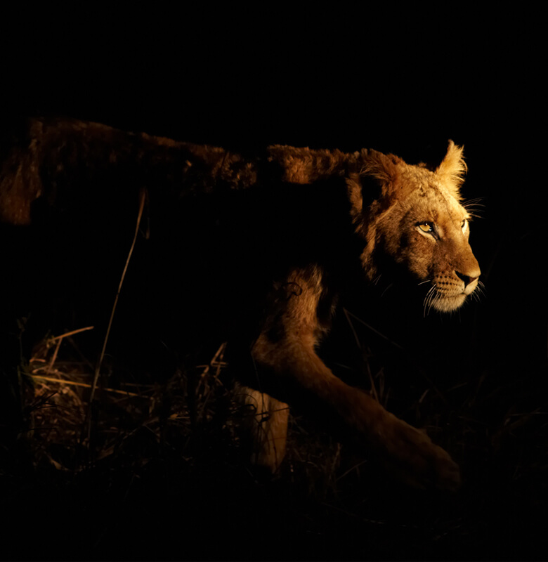 African-Night-Safari-780x800