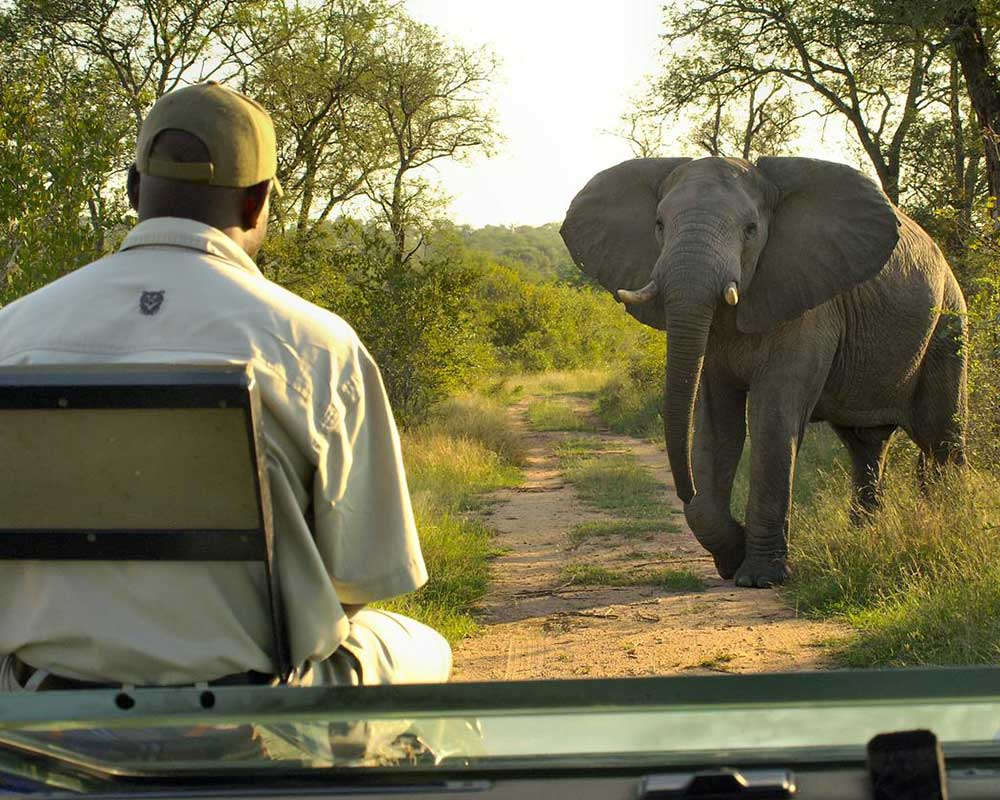 lukimbi-safari-lodge-trackers