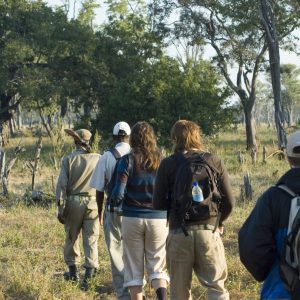 Discovering African wildlife on foot