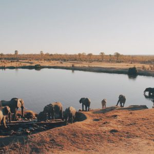 Hwange_national_park