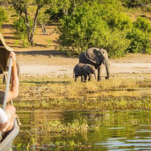 chobe_national_park-min (1)