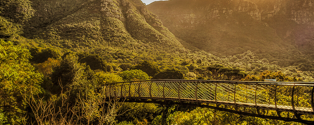The Boomslang at Kirstenbosch Botanical Gardens