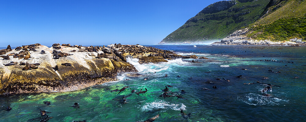 Seal island cruise in Cape Town