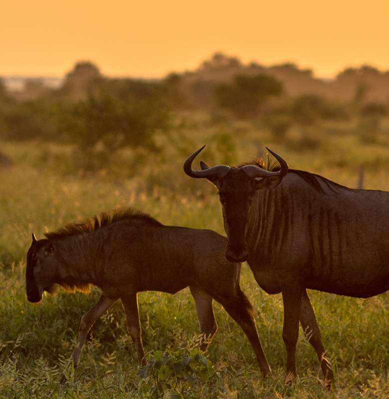 calving-season-safari-feature-small