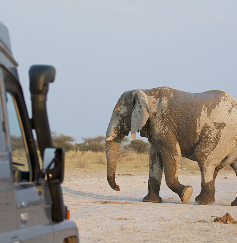 namibia-road-trip-feature